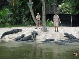 a bunch of alligators at the water's edge in front of two zookeepers
